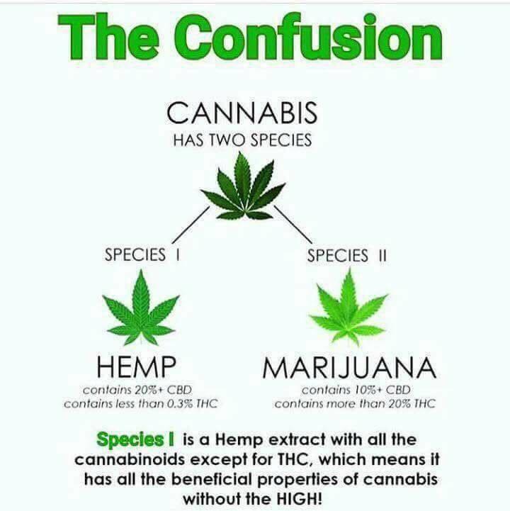 What is CBD oil vs THC