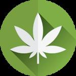 what-is-cbd-oil-leaf